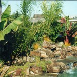 Water Features pond and plants landscape