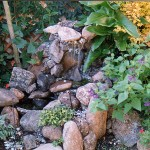Water Features plants and waterfall