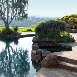 landscape pool and plants