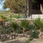 landscape low water garden