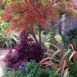 ladnscape red tree and purple bush