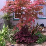 landscape red tree and bush