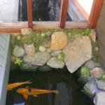 Koi Pond Garden